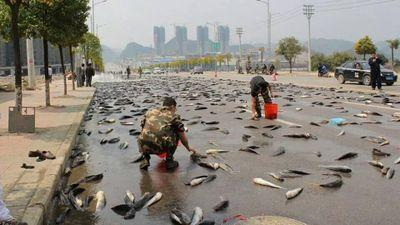 Fish falling from sky
